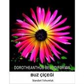 Buz Çiçeği Tohumu 2 Mesenbryanthemum Albatum...