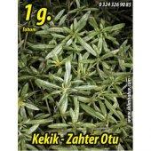 Kekik Tohumu Zahter Satureja Hortensis L 1 G. (Takribi 250 Tohum)