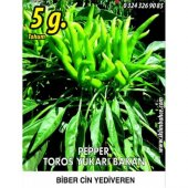 Biber Tohumu Toros Yukarı Bakan Yeşil Süs 5 G (Takribi 400 Tohum)