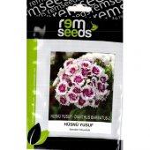Hüsnü Yusuf Çiçek Tohumu Dıanthus Barbatus 2 (Takribi 50 Tohum)