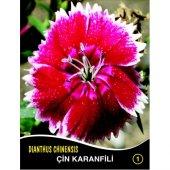 çin Karanfili Çiçek Tohumu 1 Dıanthus Chınensıs (Takribi 40 Tohum)