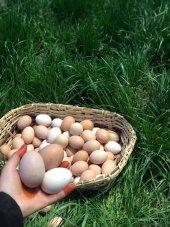 Köy Yumurtası 10 Adet