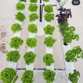 Hidroponik Bitki Yetiştirme Seti