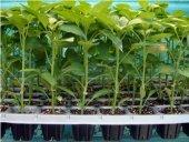 (10 Adet) 70 Göz Tohum Çimlendirme Viyolü Tohum Kabı