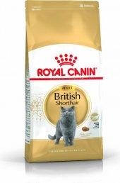 Yetişkin British Short Hair Kedilerine Royal...