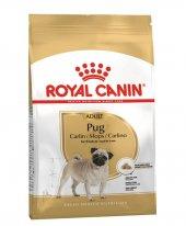 1 6 Yaş Arasındaki Pug Köpeklere Royal Canin...