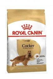 Amerikan Cocker Spaniel İçin Royal Canin Kuru...