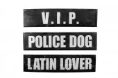 Karlie Erkek Köpek Xtreme Göğüs Tasma Slogan...