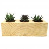 3lü Kaktüs Sukulent Aranjmanı Ahşap Bitkili