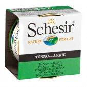 Schesir Ton Balığı Deniz Bitkili Kedi...