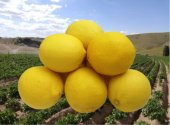 Limon (3 Kg)