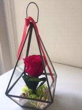 üçgen Teraryum İçine Dallı Kırmızı Solmayan Gül
