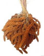 Doğal Kızıl Dal Darı Kuş Yemi 250 Gr