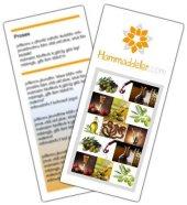 Zeytin Ağacı Üretimi ve Yetiştirilmesi Elektronik Broşürü