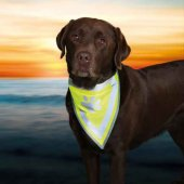 Trixie Köpek Bandanası S M 29 42 Cm