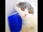 Kedi Kaşıma Masaj Fırçası Cat it
