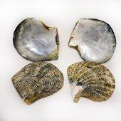 Naturel Blacklip Trim Kiloluk Deniz Kabuğu (1 KG)