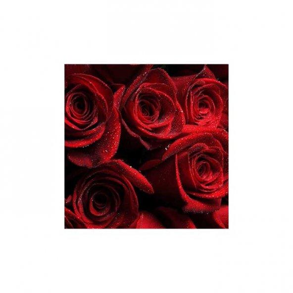 Kırmızı Güller Bulaşık Makinesi Sticker