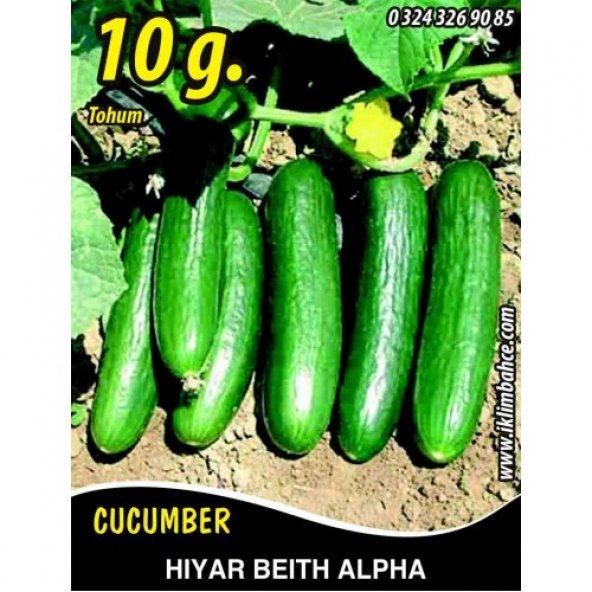 Hıyar Tohumu Salatalık Beith Alpha - 10 g (~ Takribi 200 Tohum)
