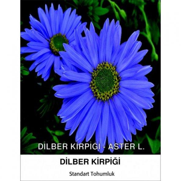 Dilber Kirpiği Çiçek Tohumu - ASTER L. Pk (~ Takribi 40 Tohum)