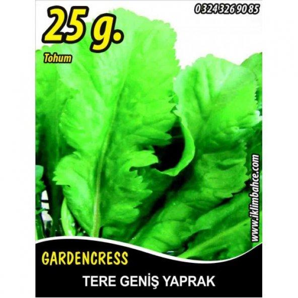 Tere Tohumu Toros Yeşili - 25 g. (~ Takribi 6250 Tohum)
