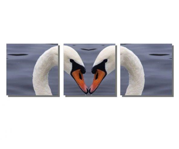 Kalpli Kuğular Tablosu