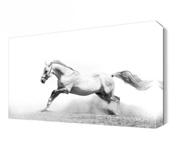 Beyaz Koşan At Canvas Tablo
