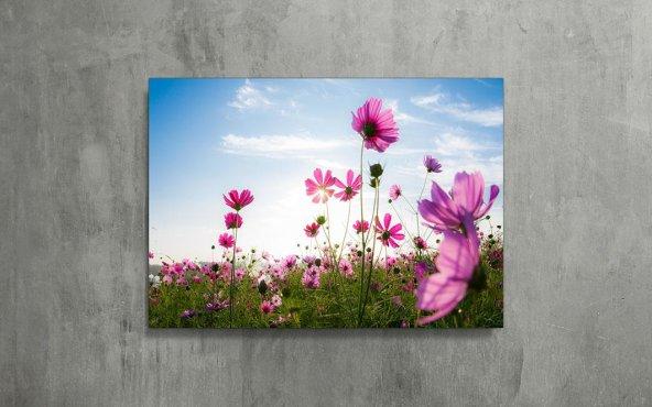 Pembe Kır Çiçekleri Kanvas Tablo
