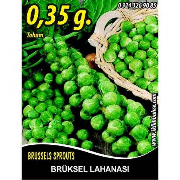 Brüksel Lahanası Tohumu 0,35 g. (~ Takribi 85 Tohum)