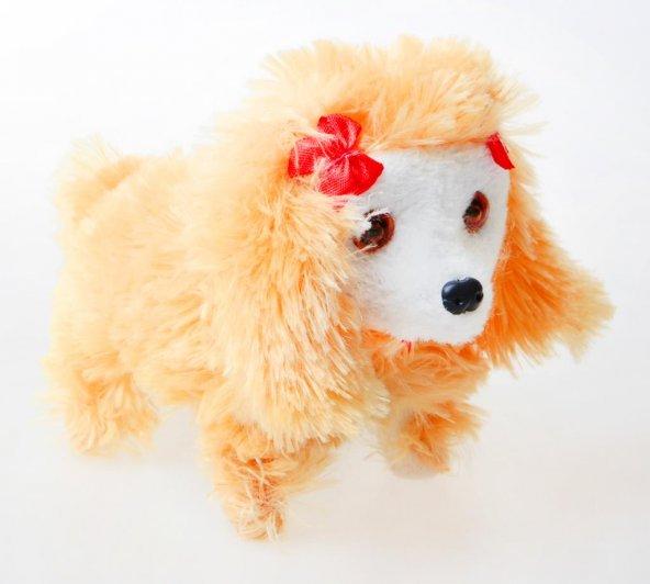 Metas Pilli Yürüyen Köpek