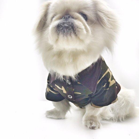 Kamuflaj Polo Yaka Tişört  Köpek Kıyafeti  Köpek Elbisesi