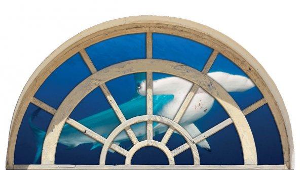 Pencere, Çekiç Başlı Köpek Balığı Duvar Sticker