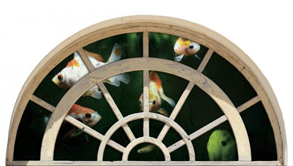 Pencere, Akvaryum, Balıklar Duvar Sticker