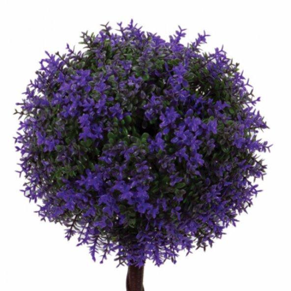 Mor Şimşir Saksılı Çiçek