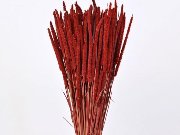 Phleum Kırmızı