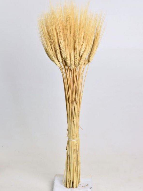 Triticum Blonde Demet
