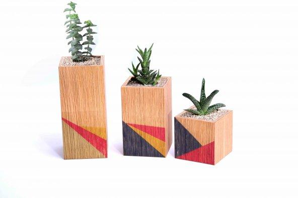 Wooden+ Tribe 3lü Renkli Saksı Meşe Ağacı