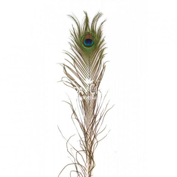 Gerçek Tavus Kuşu Tüyü 50 cm