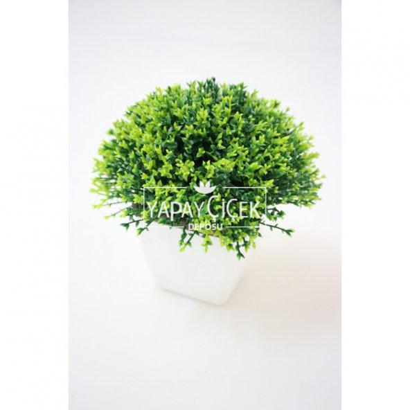 Plastik Saksıda Dekoratif Bonus Yeşil