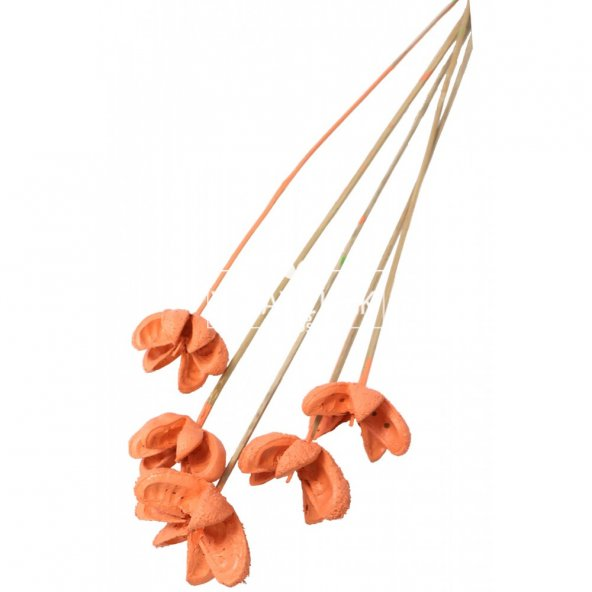 Tropic Bullet Flower Kuru Çiçek Tropik 5li Retro Somon