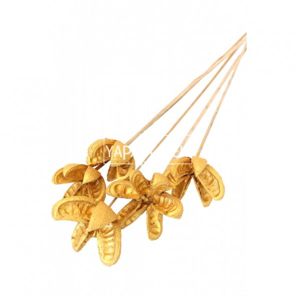Tropic Bullet Flower Kuru Çiçek 5li Gold-Altın Renk
