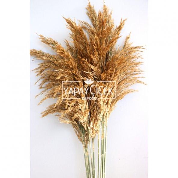 Kuru ÇiçekK Pampas 10lu Büyük Demet 100cm(Açık Kahve)