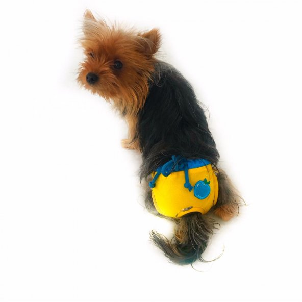 Yellow Blue Apple Secret Köpek İç Çamaşırı Regl Külot Don