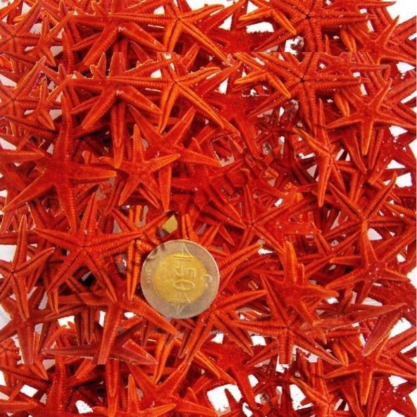 Naturel Deniz Yıldızı Minik Boy  1.5 Cm -3 Cm - 100 Adet  Kırmızı
