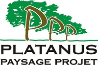 PLATANUS PAYSAGE