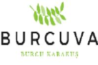 BURCUVA