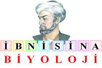 ibnisinabiyoloji
