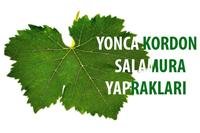 Yonca Kordon